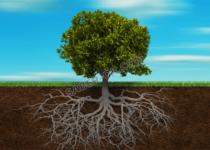 Test del Árbol deKarl Koch y…