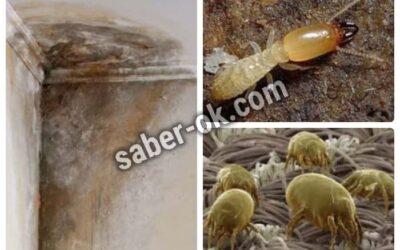 acaros de la humedad como eliminarlos acaros de la humedad en muebles