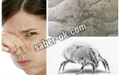 como quitar el olor a humedad de un canape