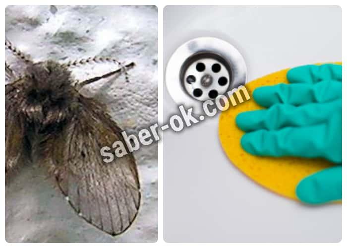 moscas de drenaje como eliminarlas