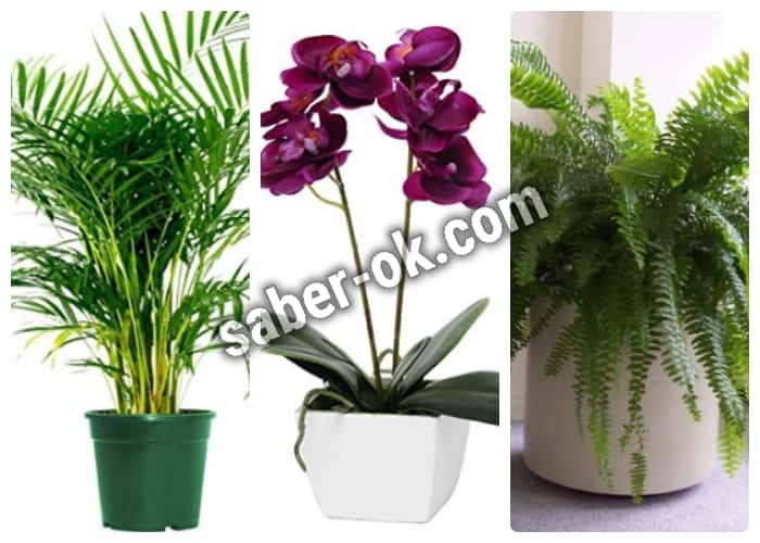 plantas que absorben el exceso de humedad