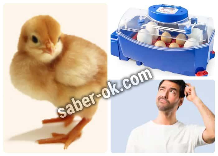 Cuidado e incubación de los huevos fértiles